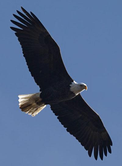 hook mountain hawk watch