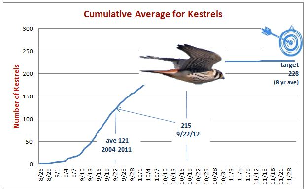 Kestrels seem to be recovering with good numbers this fall.