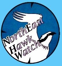 NorthEast Hawk Watch